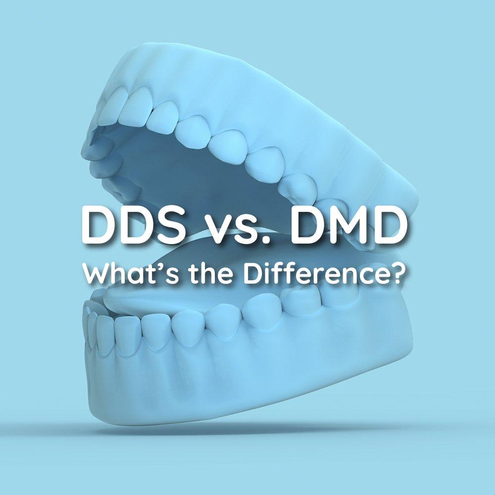 DMD vs DDS Gainesville VA